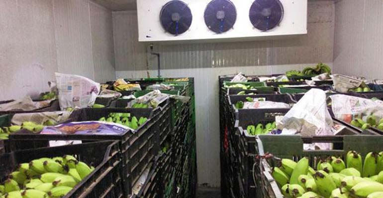 سردخانه نگهداری سبزیجات - مزایای سردخانه تجاری برای نگهداری سبزیجات چیست؟